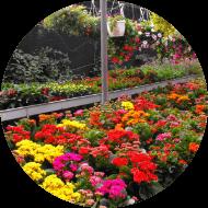 beneficios-de-las-plantas-ornamentales